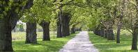 gravel road & trees